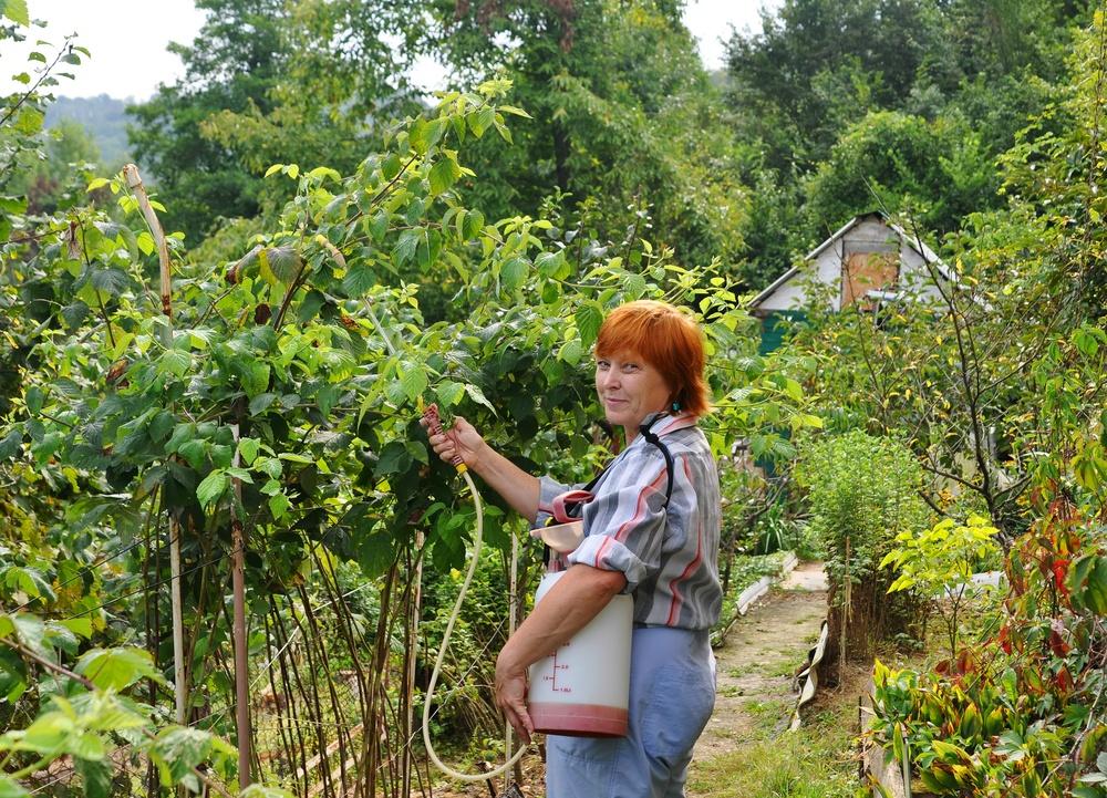 Как ухаживать за малиной весной, чтобы был хороший урожай