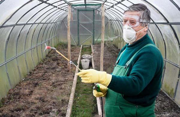 Чем обработать теплицу весной от фитофторы: растворы