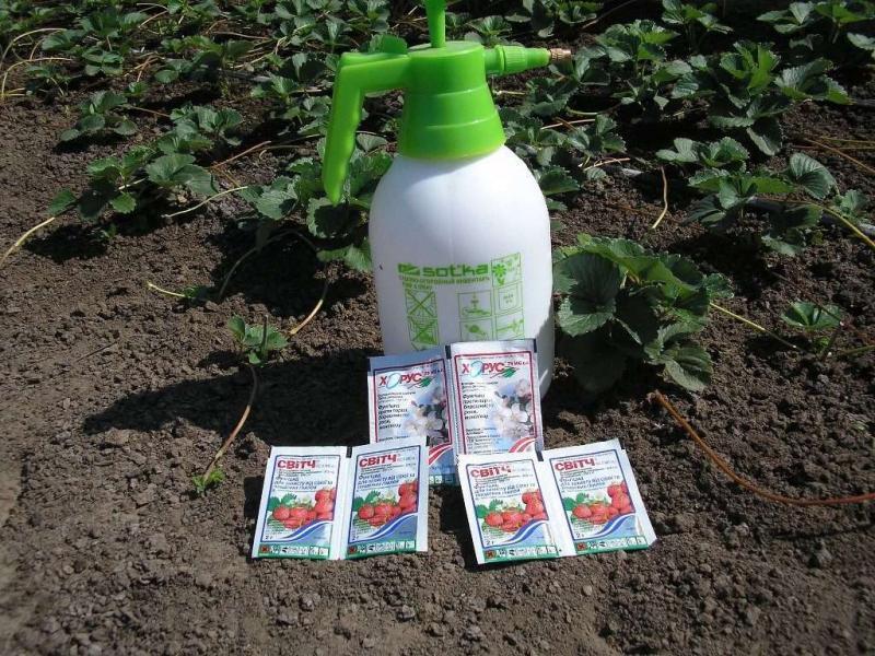 Как обработать клубнику от вредителей и болезней весной