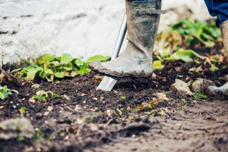 Как посадить розу? Правильная посадка роз. Фото