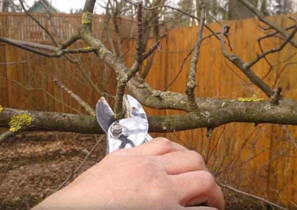 Как правильно самому обрезать деревья на даче, в саду