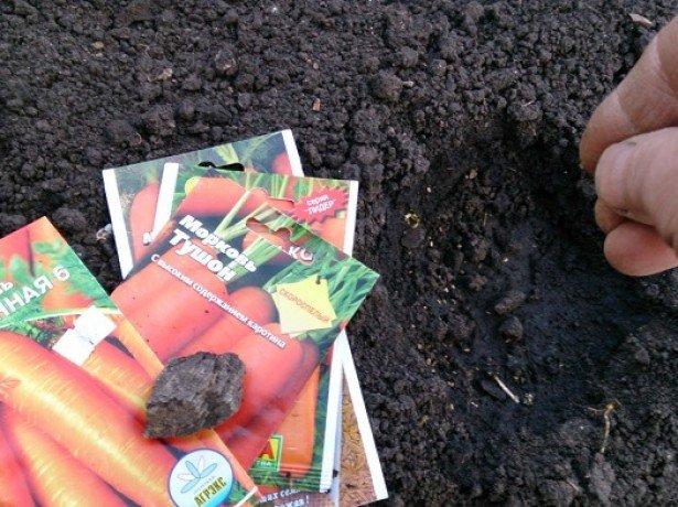 Как правильно сажать морковь: поэтапное описание процесса с нуля