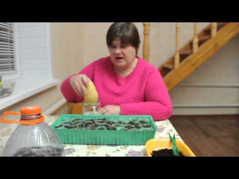 Клубника в домашних условиях: как обустроить грядку у себя дома