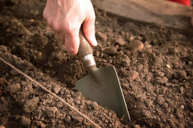 Обработка лука перед посадкой – способы, методы, подробная инструкция
