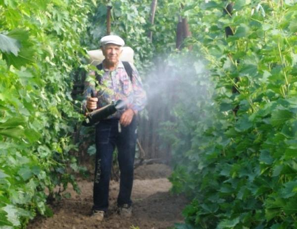 Обработка винограда весной 2019 - опасности апреля и методы
