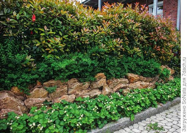Определяемся с вариантами оформления живой изгороди