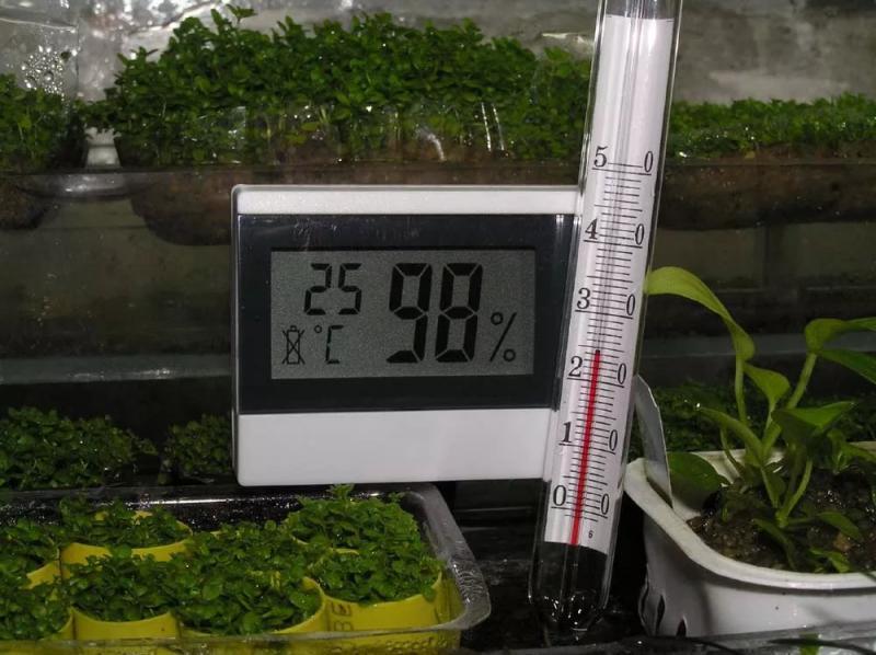 Почему не завязываются помидоры в теплице и что необходимо исправить - рекомендации на апрель.