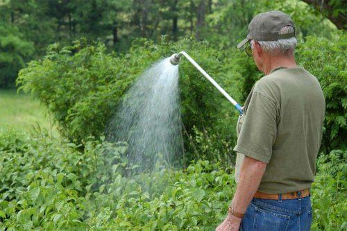 Уход за малиной весной на даче: обработка от вредителей